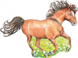 Charming Horse Non Met